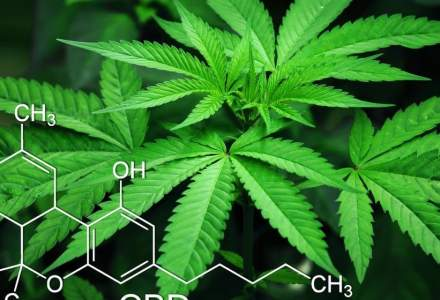DIICOT cere în instanță recuperarea banilor dați de investigatorul sub acoperire unui suspect de trafic de cannabis care nu a mai livrat marfa