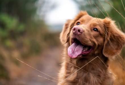 """Patru câini dresați ca să detecteze COVID-19, declarați """"câini-erou"""""""
