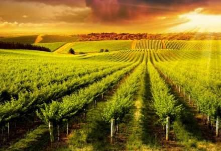"""Ministerul Agriculturii pregateste o """"lista neagra"""" cu fermierii si institutiile care nu vor mai primi subventii"""