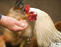 Tudose: PNL spune că găinile...