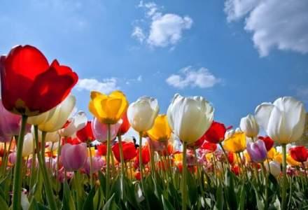 Vacanta printre flori? Cea mai mare gradina din lume a fost deschisa pentru public