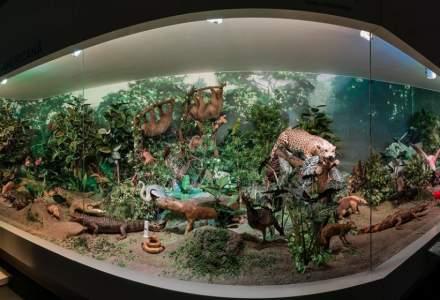 """Muzeul Naţional de Istorie Naturală """"Grigore Antipa"""" va desfășura online evenimentul Noaptea Muzeelor"""