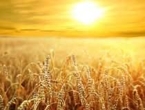 Productia de cereale pentru...
