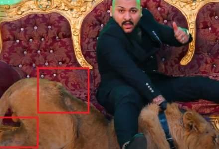 Un nou dosar penal pentru Dani Mocanu: manelistul a filmat un videoclip cu un leu rănit