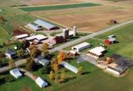 Smithfield Ferme: Nu exista nicio legatura intre virusul gripei A si fermele din Romania