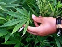 Legalizarea marijuanei este...