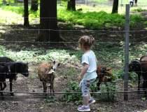 Grădina Zoologică din...