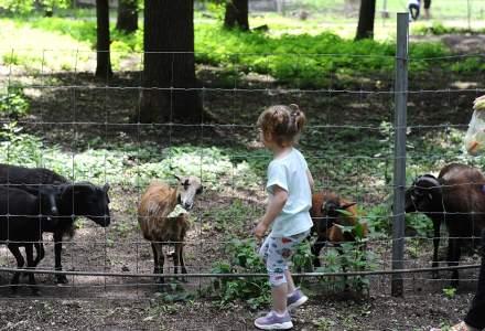 Grădina Zoologică din Timișoara se închide, după ce au apărut mai multe imagini cu un cerb bolnav
