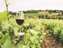 Vinul ecologic: cum se obține...