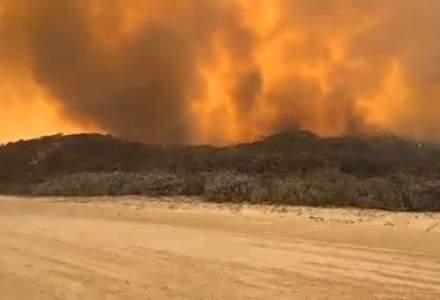 O insulă din Australia, patrimoniu UNESCO, este devastată de incendii