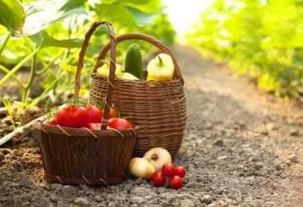 Agricultura ecologica a devenit oficial o ocupatie. Suprafetele au crescut de 4 ori in ultimii ani