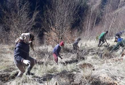 Zentiva plantează 20.000 de arbori pentru a reface o zonă din Munții Făgăraș