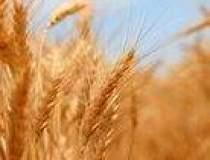 Producatorii agricoli: Seceta...