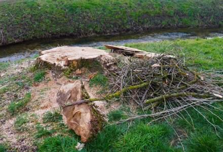 Proiect: Interzicerea tăierilor de păduri în parcurile naționale