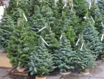 IGPR: Peste 4.000 de pomi de...