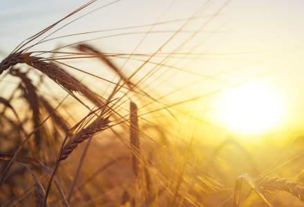 Cui a vândut România 60.000 de tone de grâu la început de an
