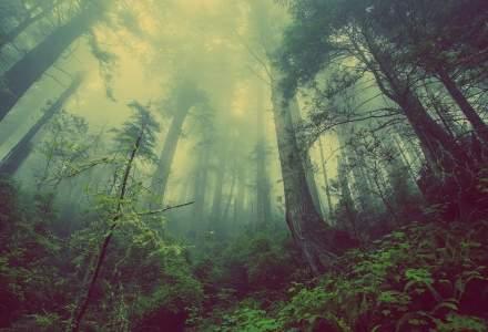 Reprezentant WWF: România îşi vinde pădurile pe un volum estimat grosier