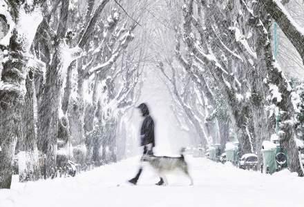 ANM: Cod galben de ninsori și viscol în opt județe din România