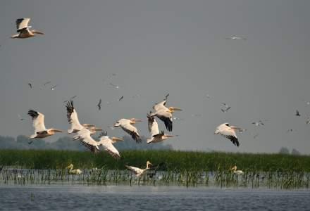 JYSK finanțează protejarea habitatelor acvatice din Delta Dunării