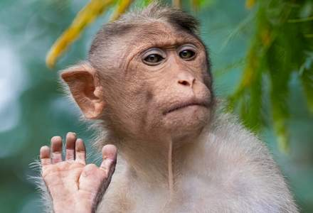 Elon Musk susține că a introdus un cip în creierul unei maimuțe