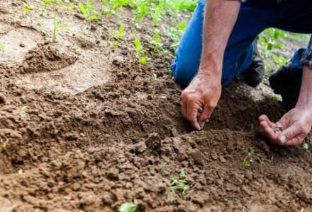 Fermierii cer suplimentarea bugetului Agriculturii pentru despăgubiri de secetă