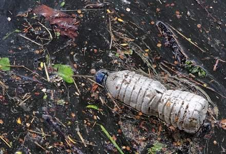Biodegradabil și nu prea: cum știm că ambalajele folosite nu afectează mediul