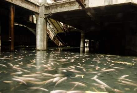 Un mall abandonat din Thailanda s-a transformat intr-un acvariu secret