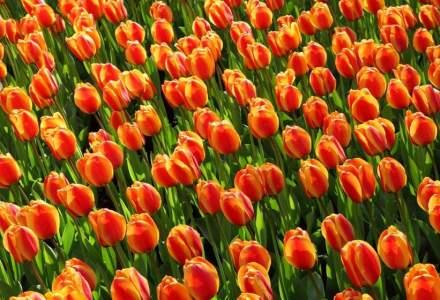 Sibiu: Donează o floare și primești un bilet la concertele filarmonicii