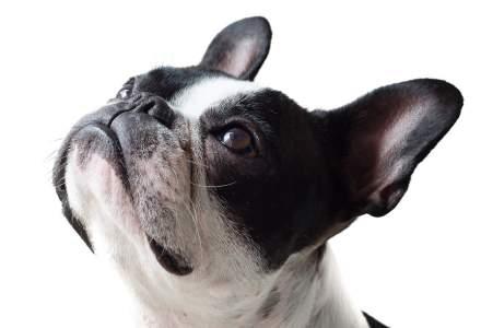 Lady Gaga oferă o recompensă de 500.000 de dolari pentru câinii ei furați