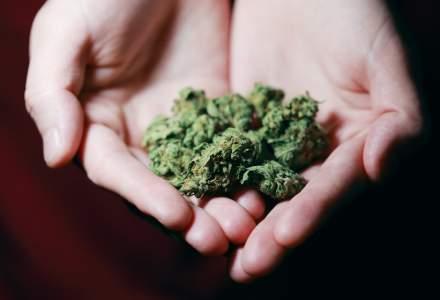 Mexicul este gata să legalizeze marijuana, devenind cea mai mare piață din lume