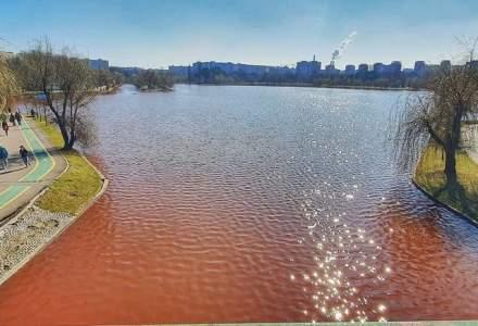 Algele roșii care au provocat înroșirea lacului IOR nu sunt toxice