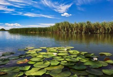 Delta Dunarii, apreciata si promovata pentru peisaje spectaculoase, in The New York Times