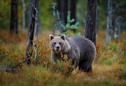 """Prima pădure """"inteligentă"""" din România: cum previne defrișarea ilegală cu ajutorul tehnologiei"""