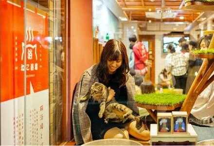 """Pensiunea în care turiștii adorm """"numărând"""" pisici"""