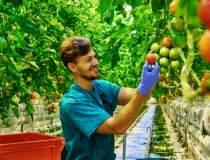 Afaceri agricultură: OPT...