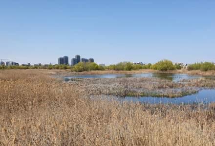 Delta Văcărești: de unde încep traseele și ce activități poți face în Rezervația Naturală Parc Văcărești