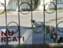 Politia animalelor,...