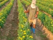 """Toti agricultorii sa..."
