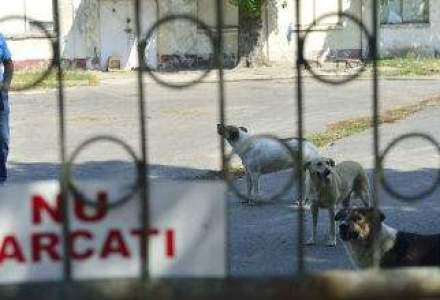 ASPA: 132 de persoane muscate de caini vagabonzi in iulie