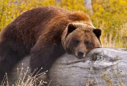 Ministrul Mediului dezminte informația că ar fi rudă cu asociația care a organizat vânătoarea ursului Arthur