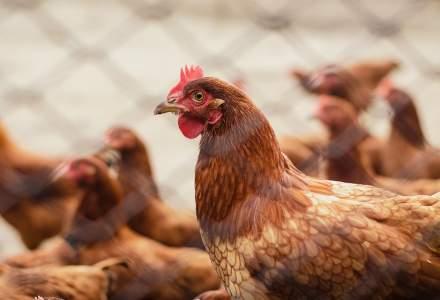 Autoritățile au interzis comerțul ambulant cu păsări, după ce s-a confirmat un focar cu gripă aviară în județul Mureș