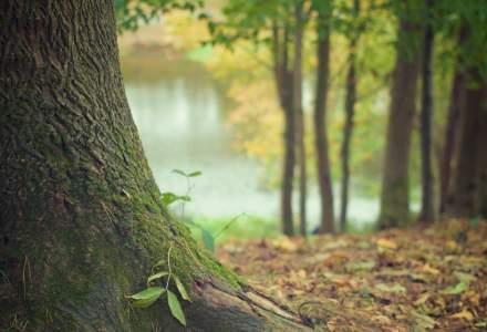 Idee inedită a unui start-up social: Faci cumpărături online și plantezi și un copac