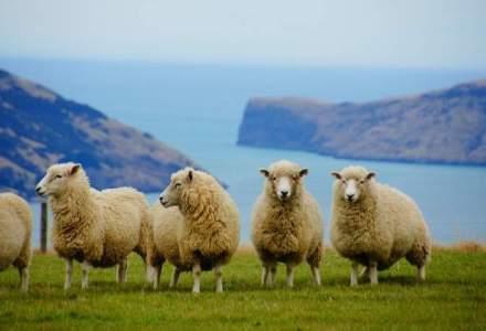 Insulele unde sunt mai multe oi decat oameni. Peisajele insa iti taie respiratia