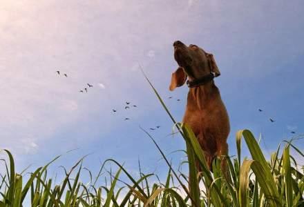 GECAD Group lanseaza in Marea Britanie Doggy&Co, un magazin online dedicat iubitorilor de caini