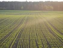 Agricultura a schiopatat in...