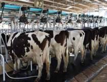 50 de fabrici de lapte,...