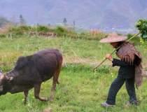 Un cioban din China s-a...