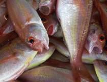 Romfish: Reducerea TVA ar...