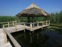 Parcul Comana, zona de...