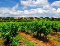 Vinurile de Bordeaux,...